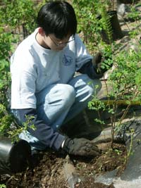 A young volunteer plants a tree on Earth Day-Arbor Day.