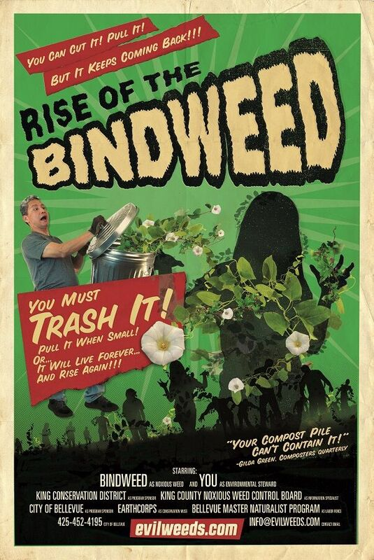 image of field bindweed poster