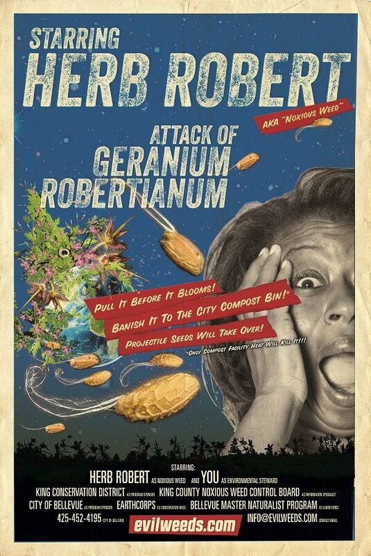 image of Herb robert poster