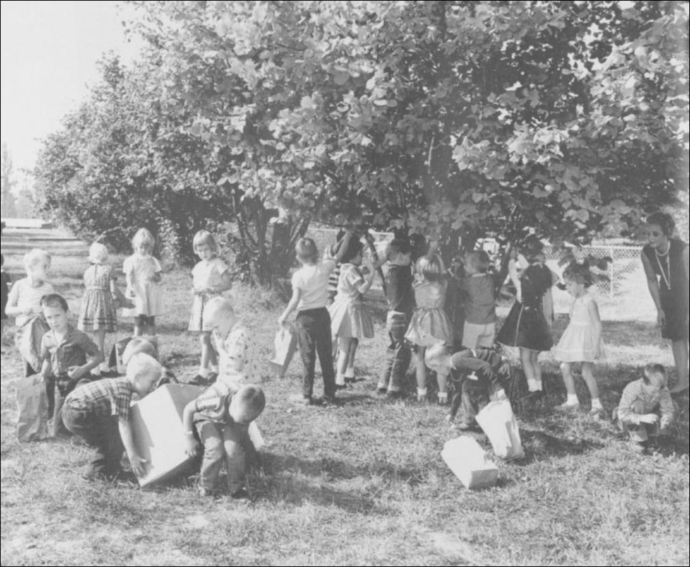 Historic photo of schoolkids harvesting filberts at Surrey D