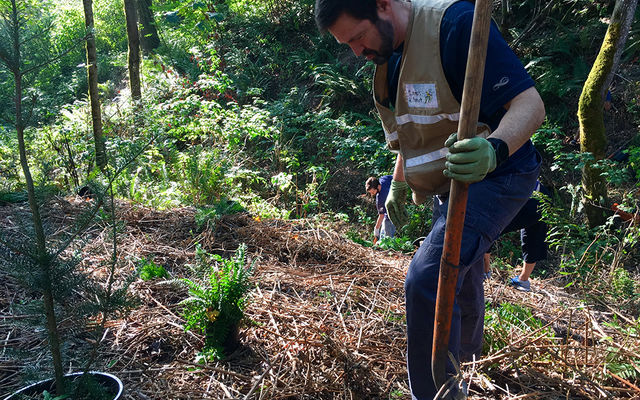 Master naturalists help with park restoration like this tree planting.