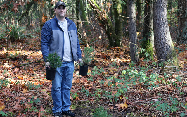 Forest management supervisor Rick Bailey holds two sequoia seedlings.