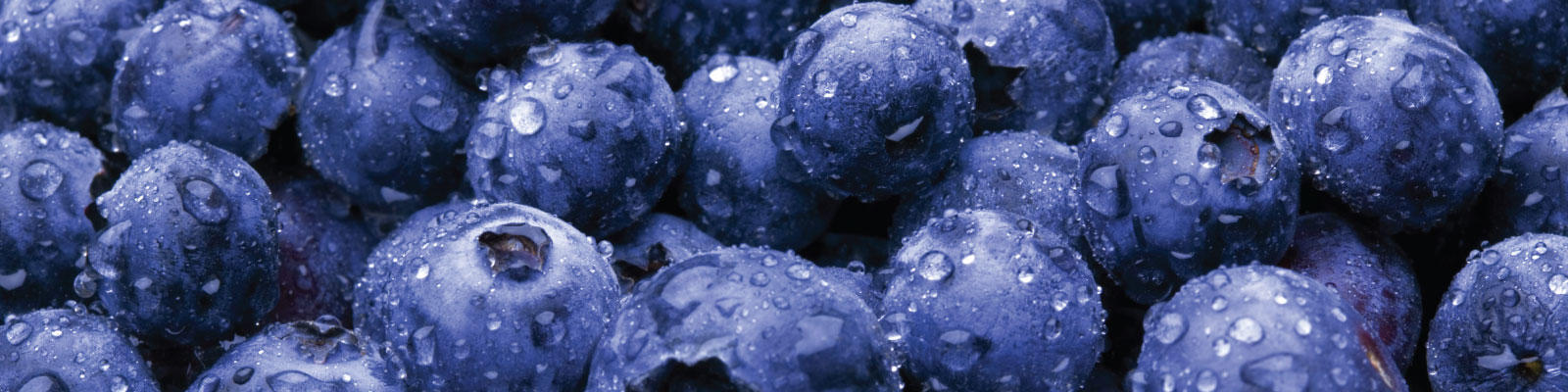 blueberry-farms-banner.jpg