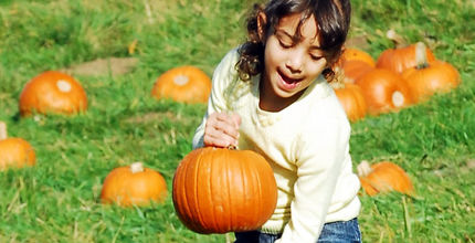 A girl picks a pumpkin at the Kelsey Creek Farm Fair.