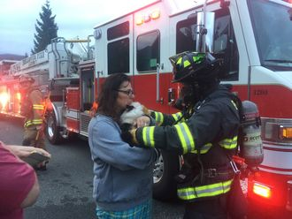 Firefighter gives rescued cat to owner
