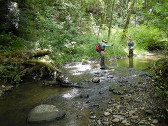 Stream Habitat Assessment