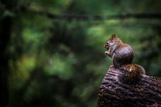 Image of squirrel on a log